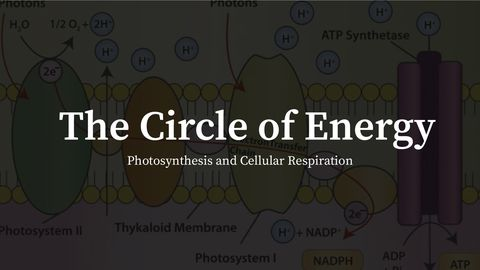 The Circle of Energy: Photosynthesis and Cellular Respiration