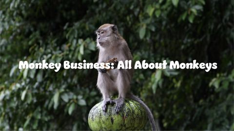 Monkey Business: All About Monkeys