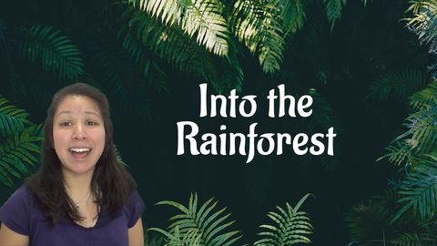 Types of Forests: Rainforest