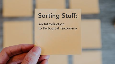 Sorting Stuff: An Introduction to Biological Taxonomy