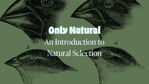 Only Natural: An Introduction to Natural Selection